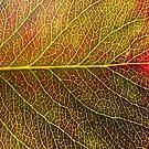 Abstract Leaf Color Study 4 by Kari Sutyla
