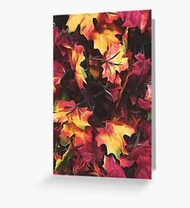 maple leaves texture background in autumn season Greeting Card