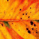 Abstract Leaf Color Study 5 by Kari Sutyla