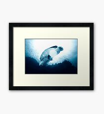 Napolean of the Red Sea Framed Print