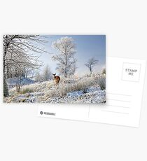 Glen Shiel Misty Winter Deer Postcards