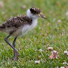 Happy Chick by byronbackyard