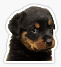 Rotweiler Sticker