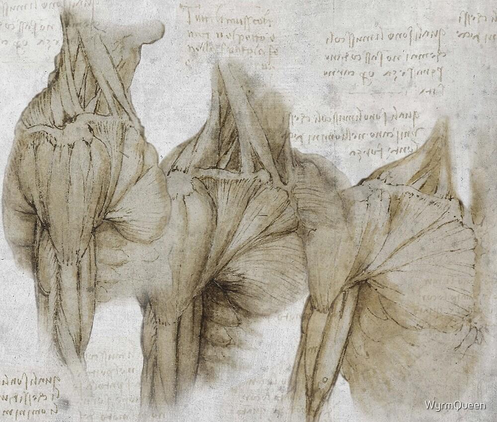 Anatomía Da Vinci» de WyrmQueen | Redbubble