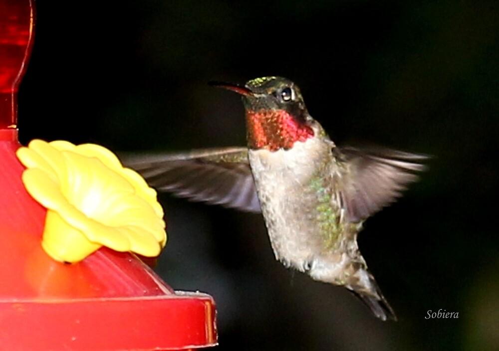Ruby-Throated Hummingbird by Rosemary Sobiera