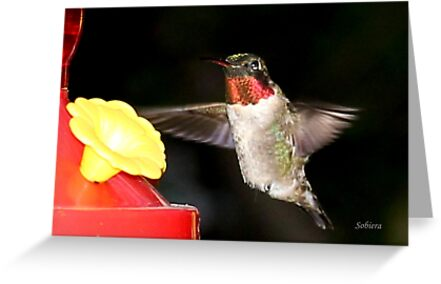 Ruby-Throated Hummingbird by Rosemary Sobiera
