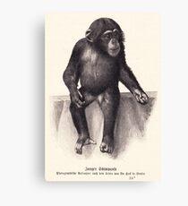 vector monkey child Canvas Print