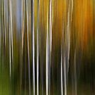 Autumn Aspens by Peter Hammer