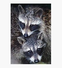 Adorable Baby Racoons Photographic Print