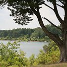 A QUIET DAY AT THE LAKE by Brenda Planchon