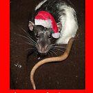 Christmas Dumbo rat by mindgoop