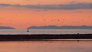 Orange skt at Maidewns, Ayrshire, Scotland by Cliff Williams