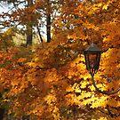 Autumn Light by Elena Skvortsova
