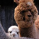 Mummy I wanna see it too! by patjila