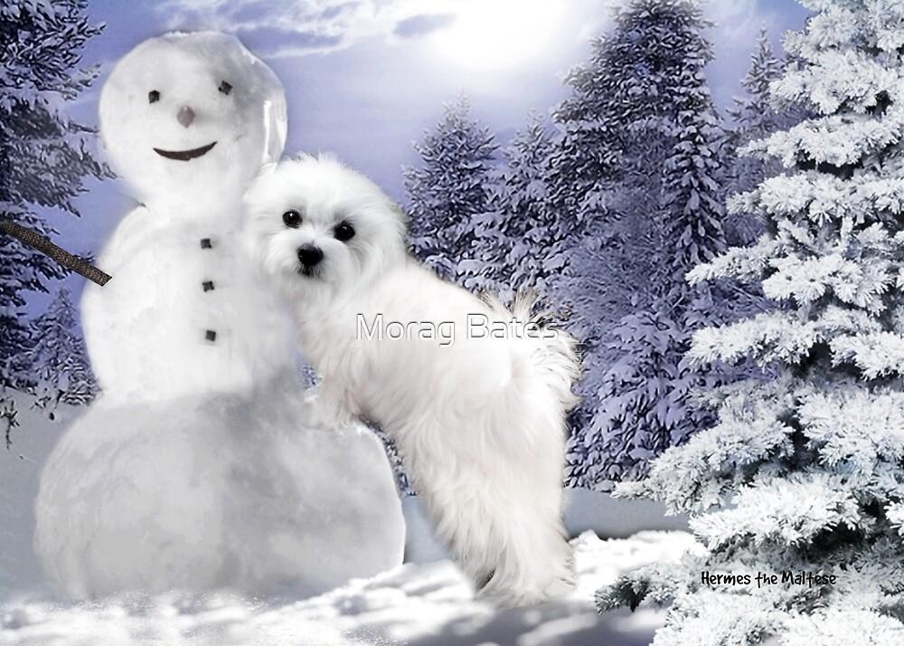 Hermes & the Snowman by Morag Bates