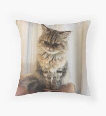 cute persian kitten Throw Pillow