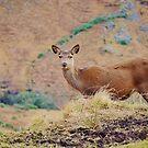 Doe A Deer by Carla Maloco