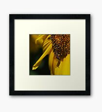 The Bees Knee Framed Print