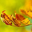 Fall in Motion by boxx2genetica