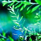 Jungle Dream by boxx2genetica