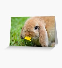 Curious Bunny Greeting Card