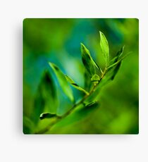 Fresh Nature Canvas Print