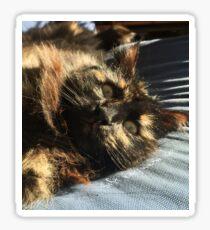 Soft kitty  Sticker