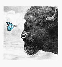 Bison and Butterfly Photographic Print