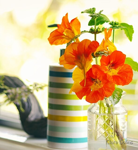 Nasturtiums on my windowsill by Clare Colins