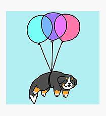 Balloon Bernese Mountain Dog Photographic Print