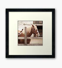 Braunes Pferd Fotografie Gerahmtes Wandbild
