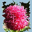 BAD HAIR DAY, PINK DAHLIA FLOWER by Nicola Furlong