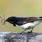 Willie wagtail by Trish Threlfall