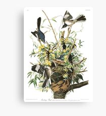 Mockingbird - John James Audubon Canvas Print