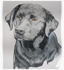 Drawing of a black labrador Poster