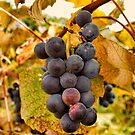 Grapes by Penny Fawver