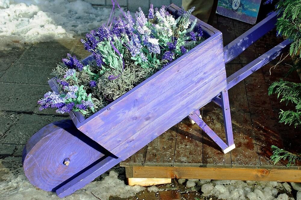 Lavender wheelbarrow by Arie Koene