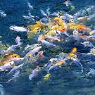 frenetic fish, koi food fight by Karol Franks