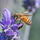 Lavendar flower with bee by Karen Stevenson