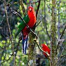 Australian King Parrots in the Aussie bush by Karen Stevenson
