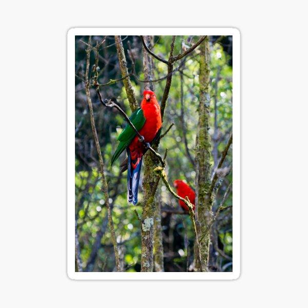 Australian King Parrots in the Aussie bush Sticker