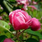 A Single Pink Blossom by Vivian Eagleson