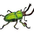 Green Stag Beetle  by Jason Castillo