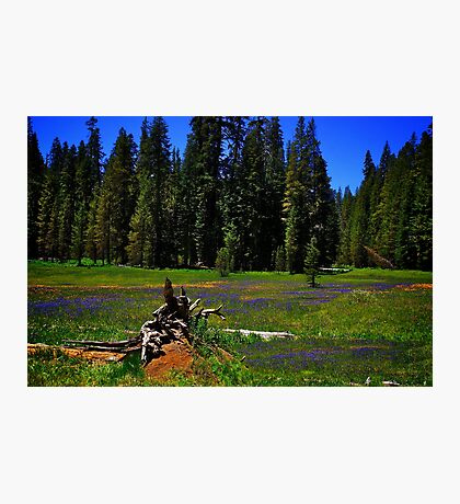 Summit Meadow at Yosemite Photographic Print
