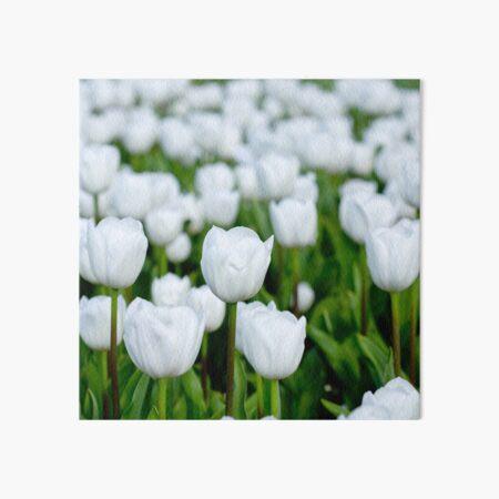 White tulips in a field Art Board Print