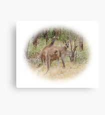 Kangaroos in the Park Canvas Print