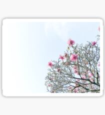 pink magnolias in the sky Sticker