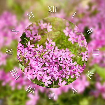 Phlox subulata pink flowering macro by ArlettaCwalina
