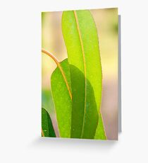 Eucalypt leaves Greeting Card