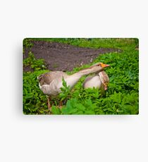 Under protection Canvas Print